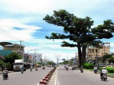 Lịch sử cây dầu đôi hơn 350 tuổi Khánh Hòa